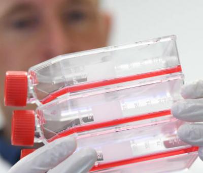 الإمارات تؤكد حالات لفيروس كورونا