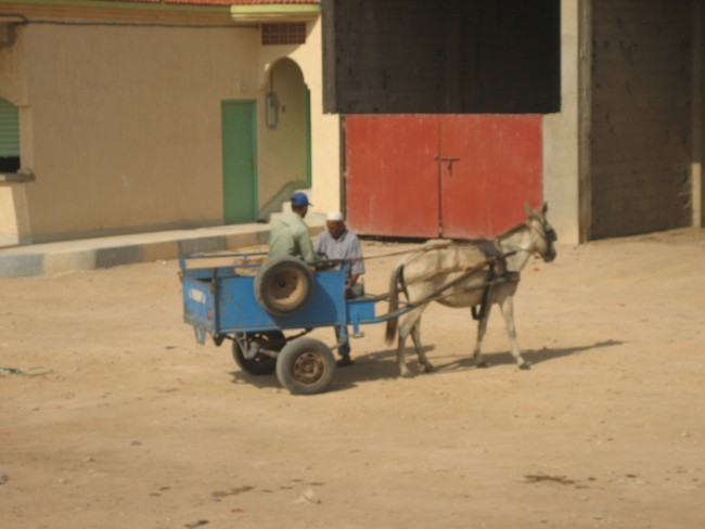 horse carriages are recognised in Safi