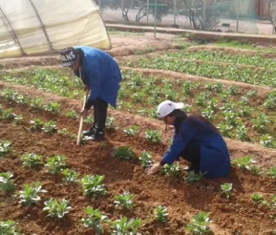 Morocco Invests $36 Million to Assist Farmers