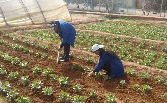Morocco Invests $36 Million to Assist Farmers, Morocco Invests $36 Million to Assist Farmers, Middle East Politics & Culture Journal